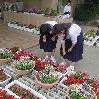 栽培委員会が校内を華やかにしてくれています。