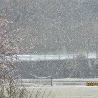 今年初めての雪景色です